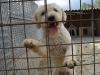 """""""Mogyoró Menedék"""" animal shelter - Szentes"""