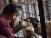 """""""Papamaci Árvái"""" animal shelter - Gyöngyöshalász"""